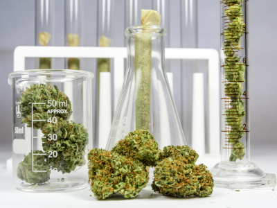 Cannabis terapeutica, Tobia: forte carenza. Costa annuncia bandi per incrementare produzione in Italia